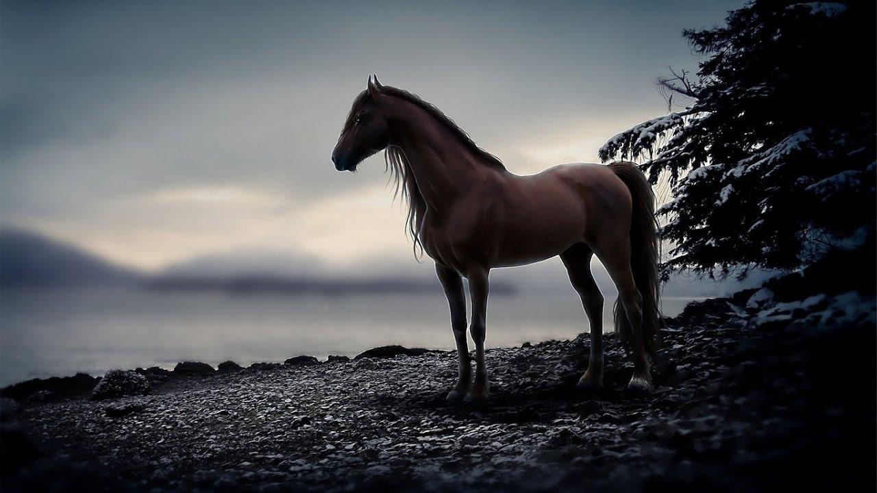 'Выйду ночью в поле с конём...' (Ученики студии 'Камертон')