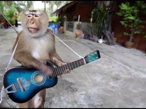Как держать гитару. Постановка рук.
